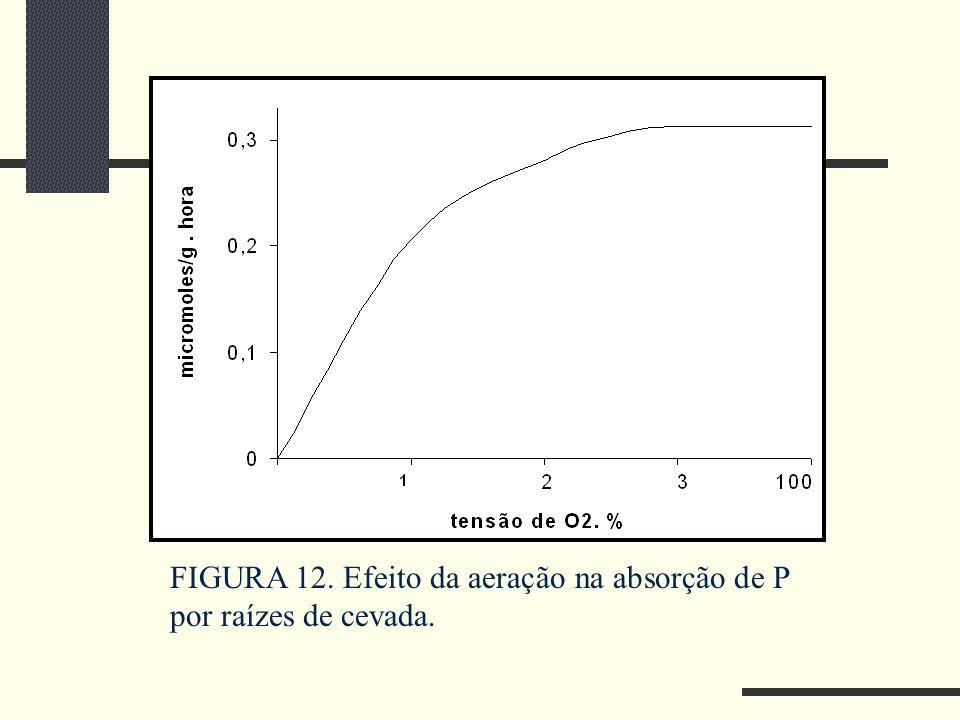 FIGURA 12. Efeito da aeração na absorção de P por raízes de cevada.