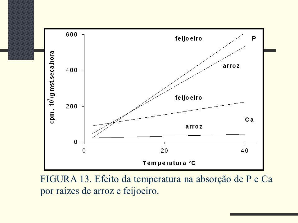 FIGURA 13. Efeito da temperatura na absorção de P e Ca por raízes de arroz e feijoeiro.
