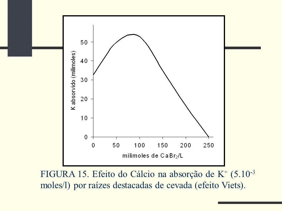FIGURA 15. Efeito do Cálcio na absorção de K+ (5