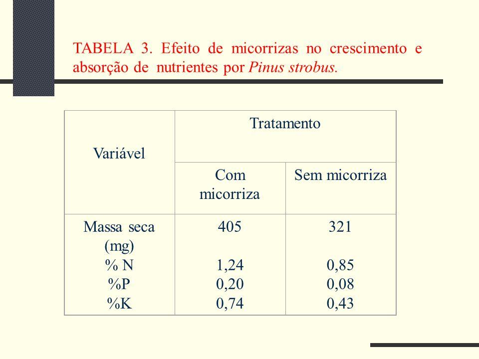 TABELA 3. Efeito de micorrizas no crescimento e absorção de nutrientes por Pinus strobus.