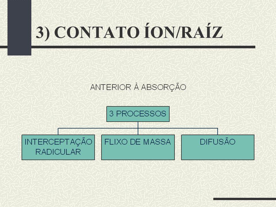 3) CONTATO ÍON/RAÍZ