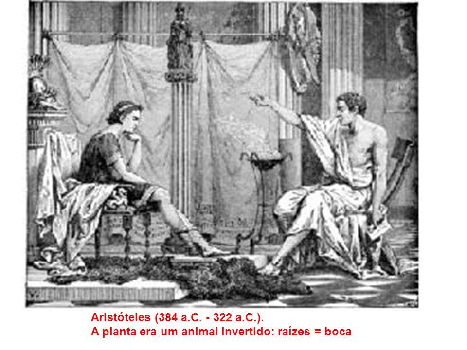 Aristóteles (384 a.C. - 322 a.C.). A planta era um animal invertido: raízes = boca