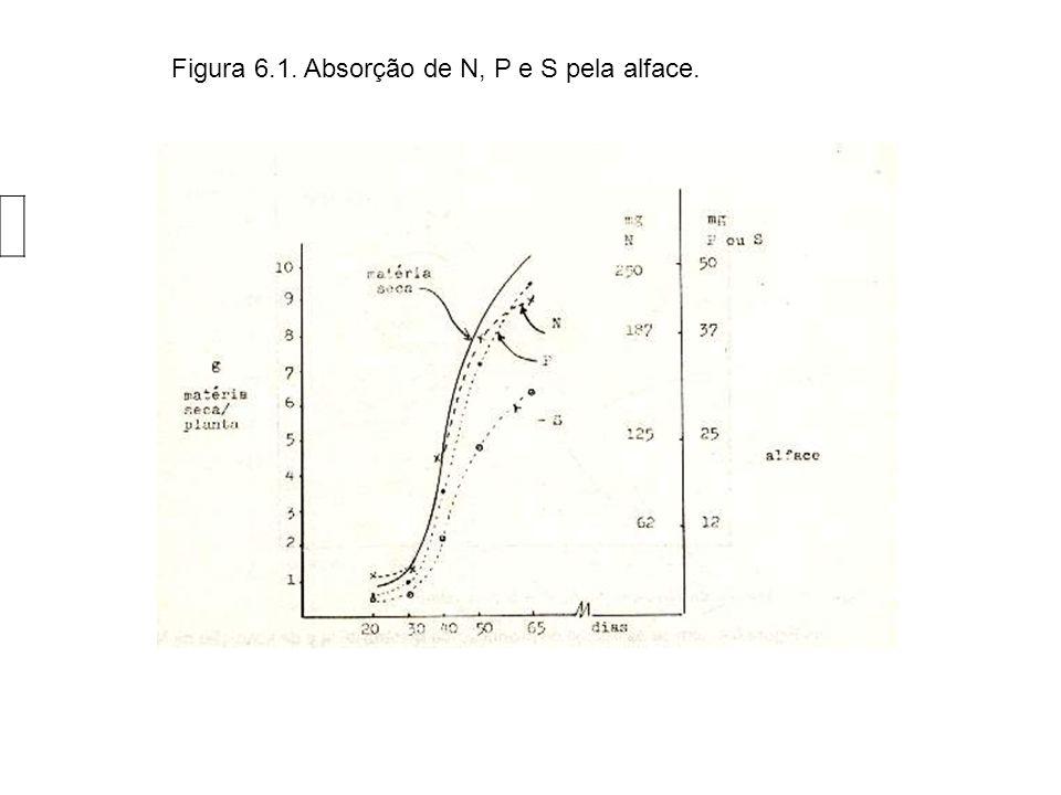 Figura 6.1. Absorção de N, P e S pela alface.