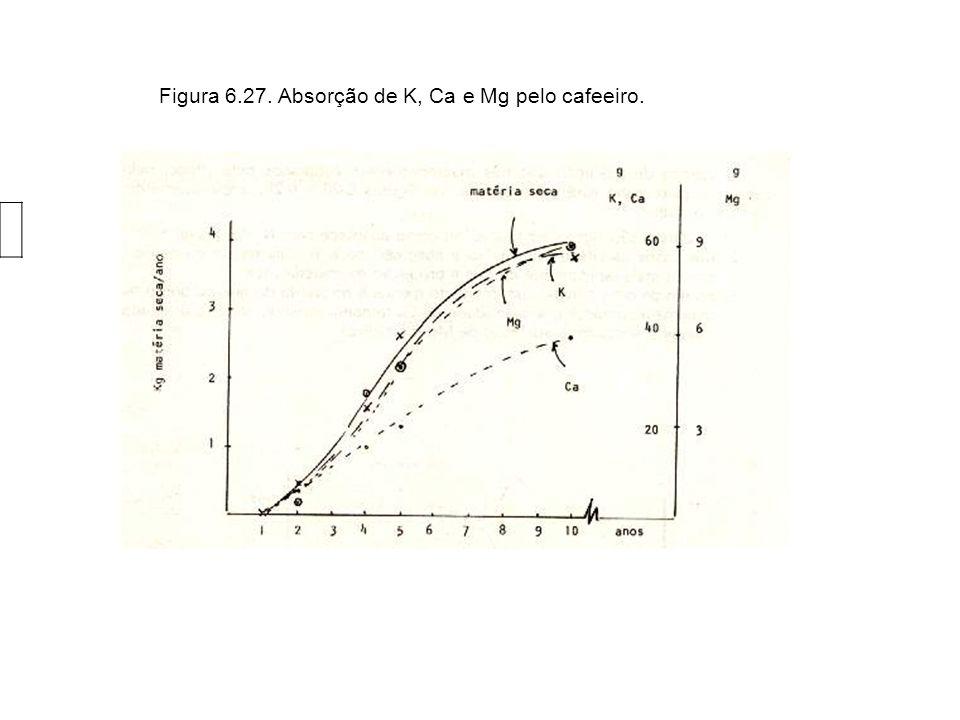 Figura 6.27. Absorção de K, Ca e Mg pelo cafeeiro.