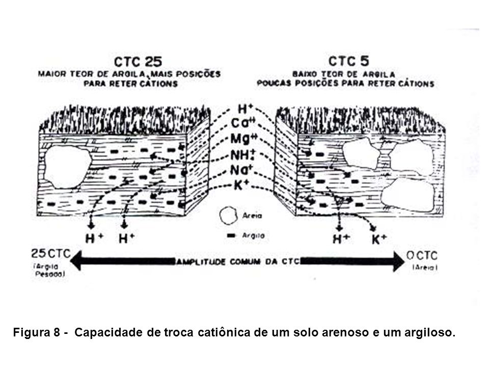 Figura 8 - Capacidade de troca catiônica de um solo arenoso e um argiloso.