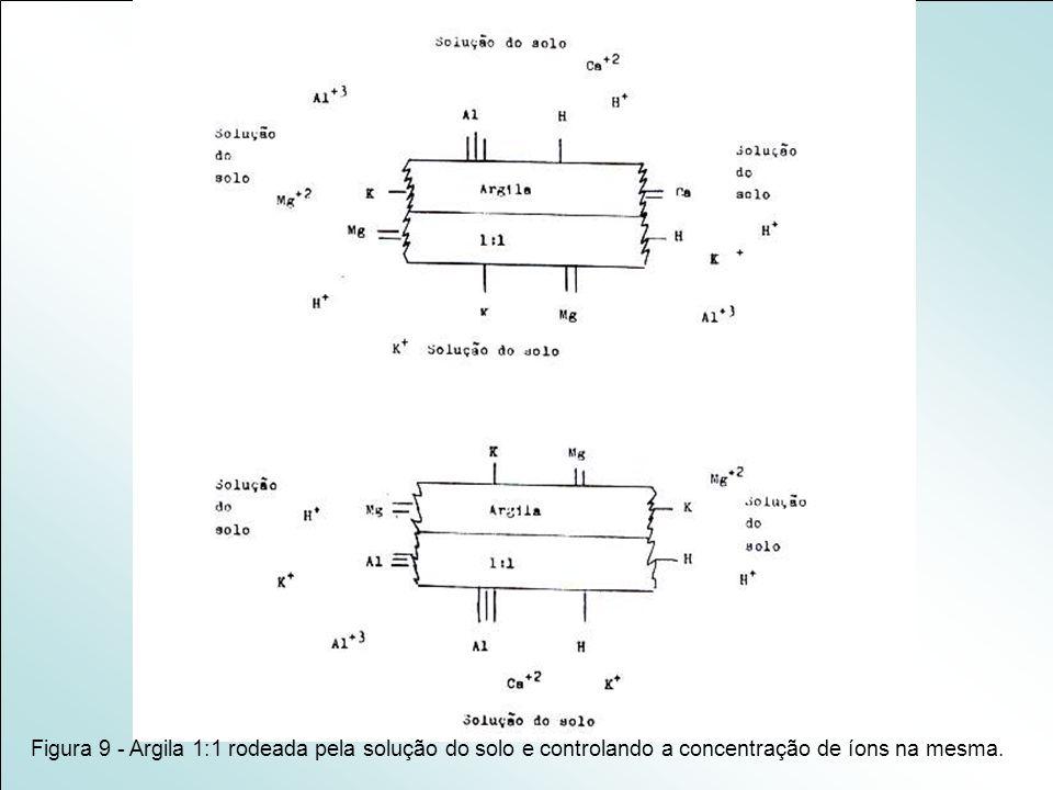 Figura 9 - Argila 1:1 rodeada pela solução do solo e controlando a concentração de íons na mesma.