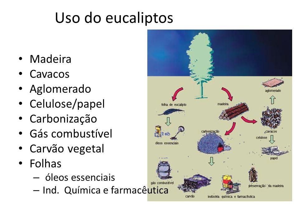 Uso do eucaliptos Madeira Cavacos Aglomerado Celulose/papel