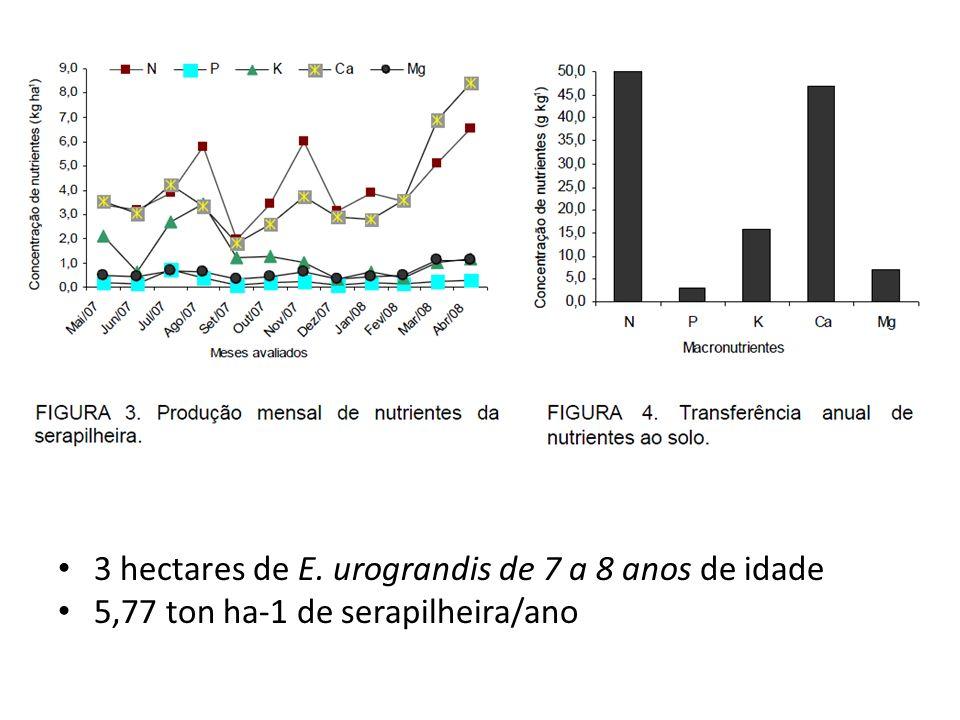 3 hectares de E. urograndis de 7 a 8 anos de idade