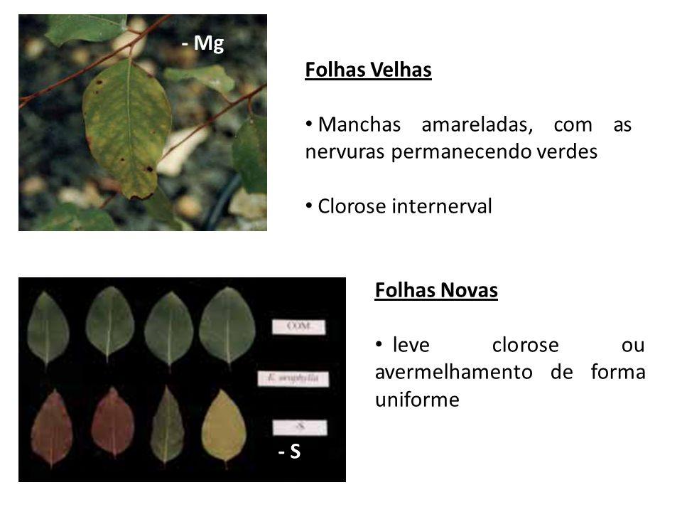 - MgFolhas Velhas. Manchas amareladas, com as nervuras permanecendo verdes. Clorose internerval. Folhas Novas.