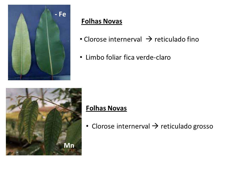 - FeFolhas Novas. Clorose internerval  reticulado fino. Limbo foliar fica verde-claro. Folhas Novas.
