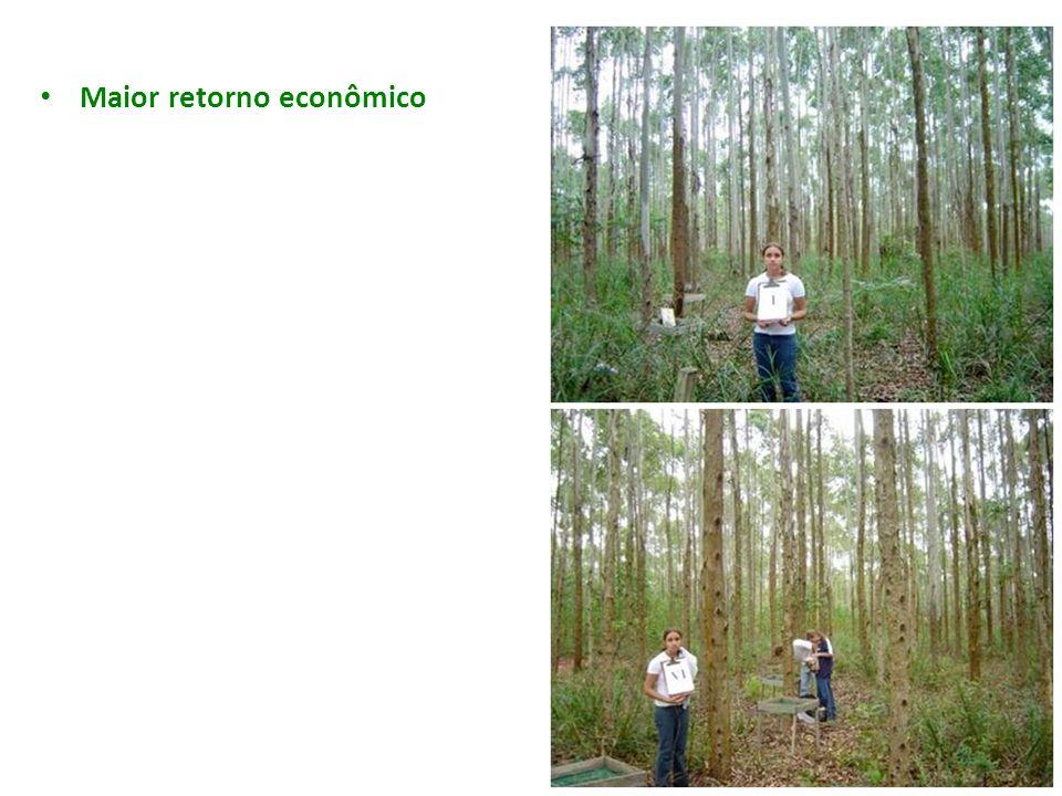 Maior retorno econômico