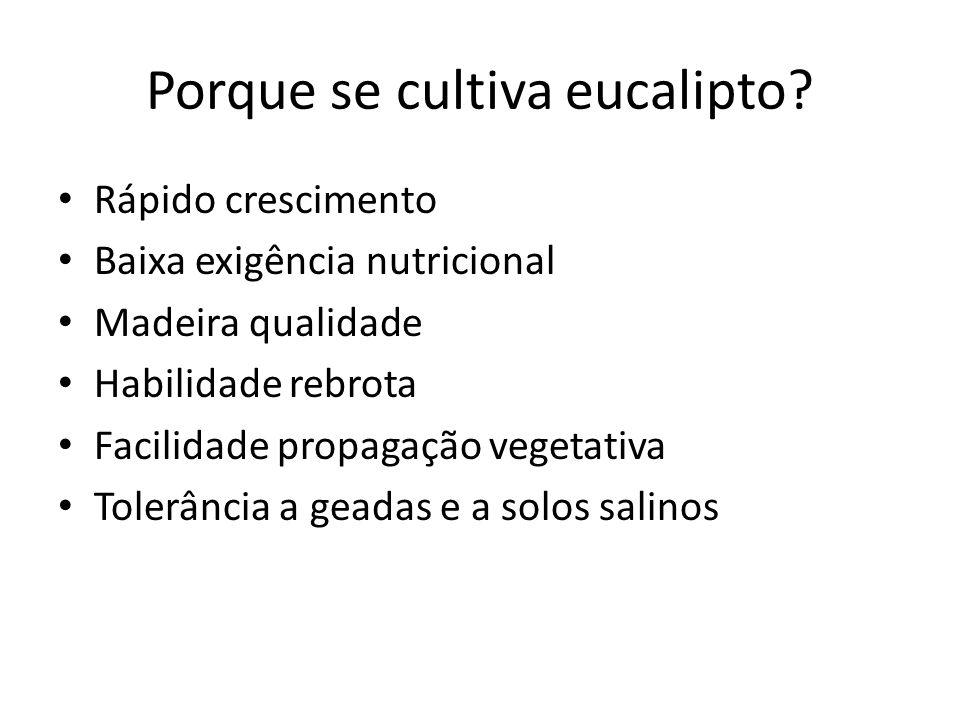 Porque se cultiva eucalipto