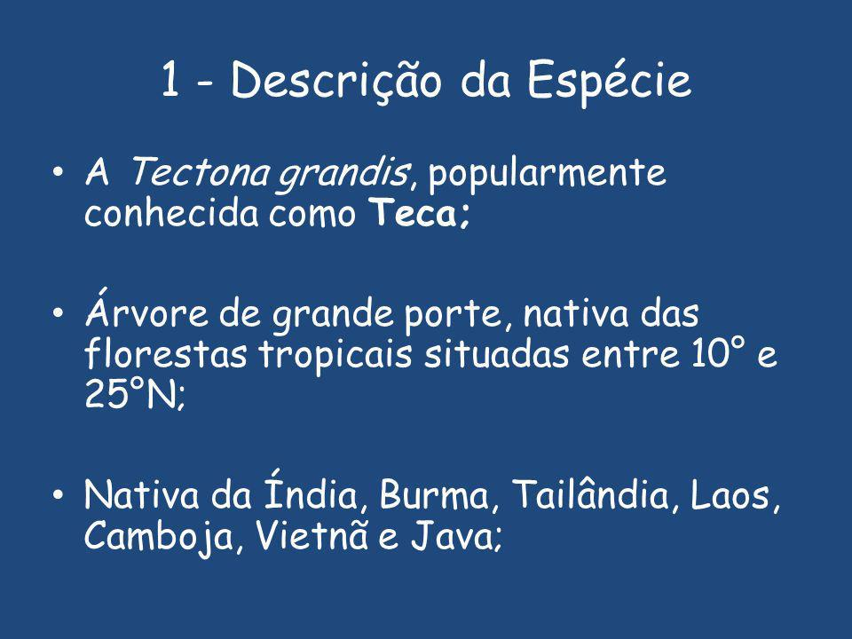 1 - Descrição da Espécie A Tectona grandis, popularmente conhecida como Teca;