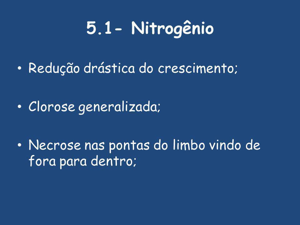 5.1- Nitrogênio Redução drástica do crescimento; Clorose generalizada;