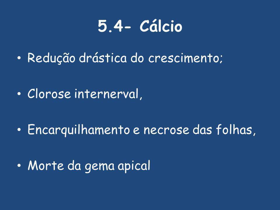 5.4- Cálcio Redução drástica do crescimento; Clorose internerval,