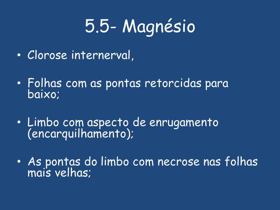 5.5- Magnésio Clorose internerval,