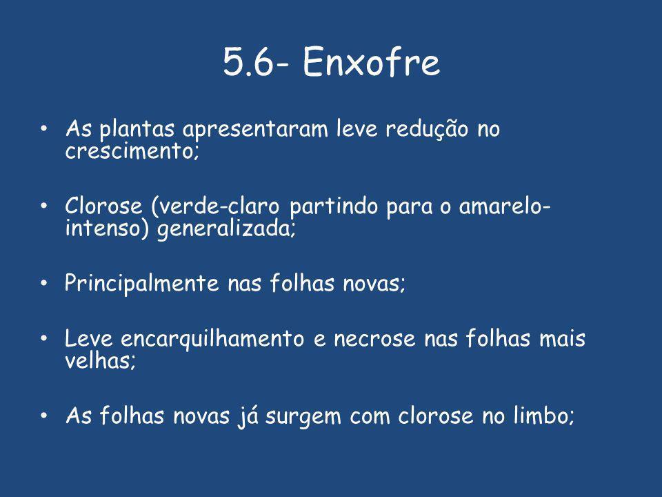 5.6- Enxofre As plantas apresentaram leve redução no crescimento;