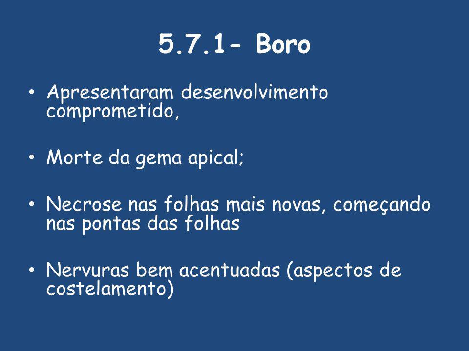 5.7.1- Boro Apresentaram desenvolvimento comprometido,