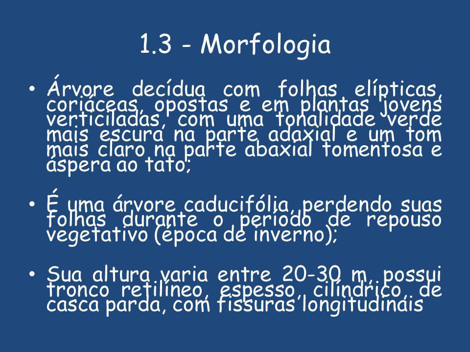1.3 - Morfologia