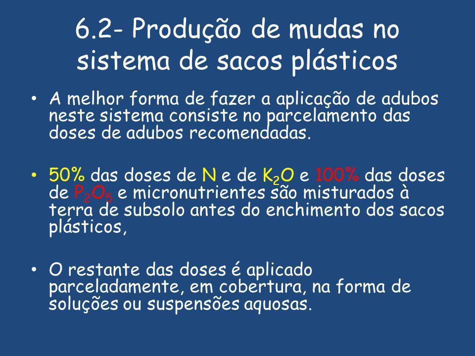 6.2- Produção de mudas no sistema de sacos plásticos