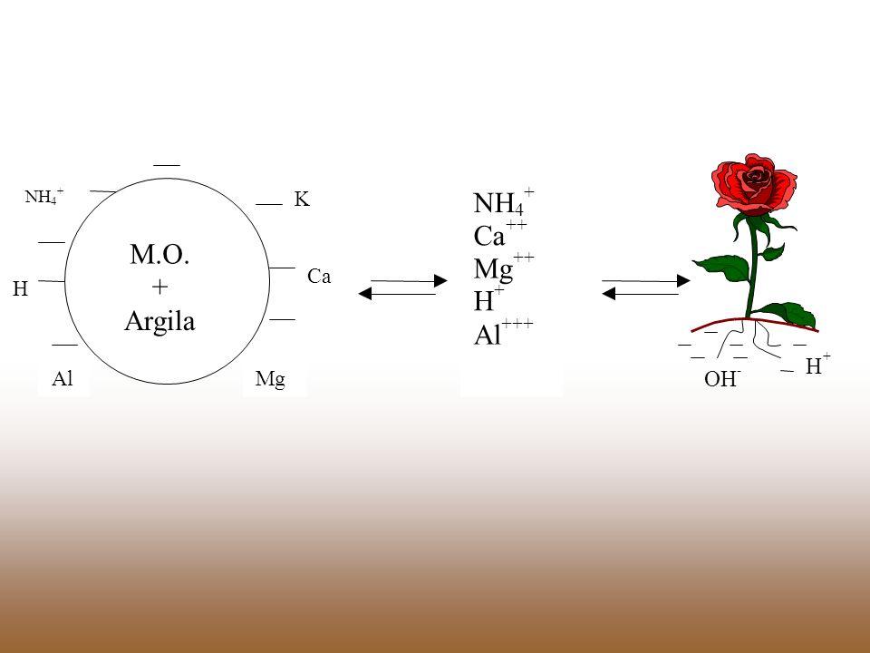 M.O. + Argila NH 4 H Al K Ca Mg ++ +++ OH -