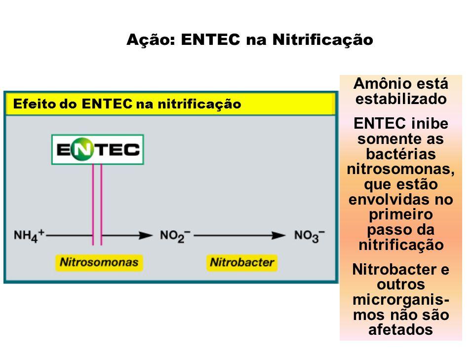 Ação: ENTEC na Nitrificação