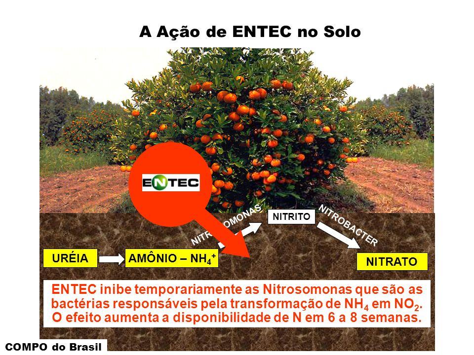 A Ação de ENTEC no Solo NITRITO. NITROSOMONAS. NITROBACTER. URÉIA. AMÔNIO – NH4+ NITRATO.