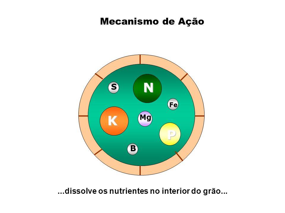 ...dissolve os nutrientes no interior do grão...