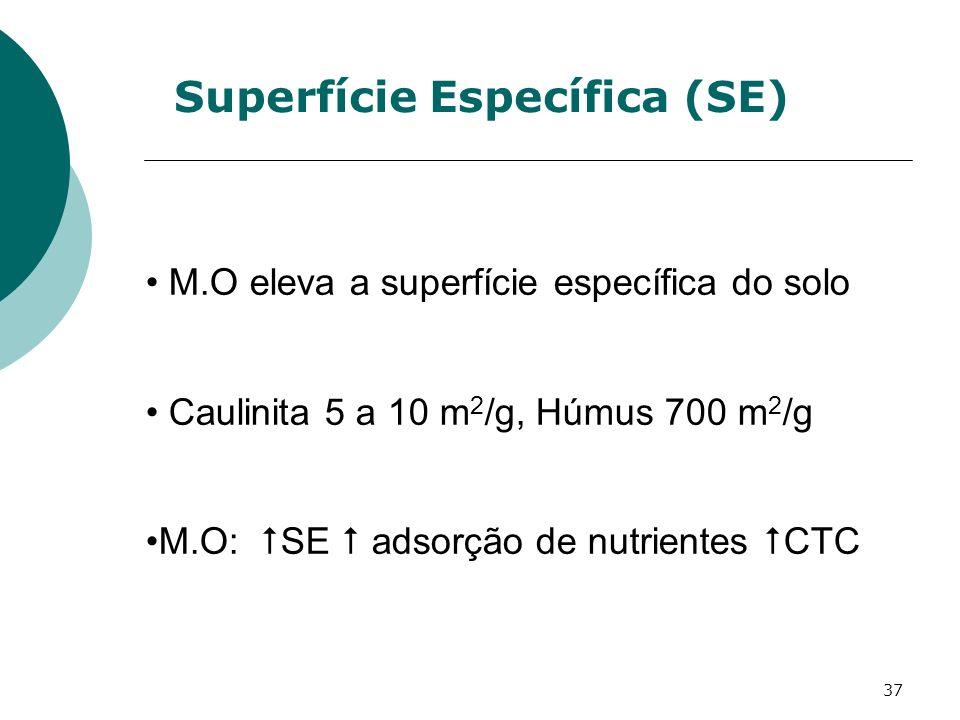 Superfície Específica (SE)