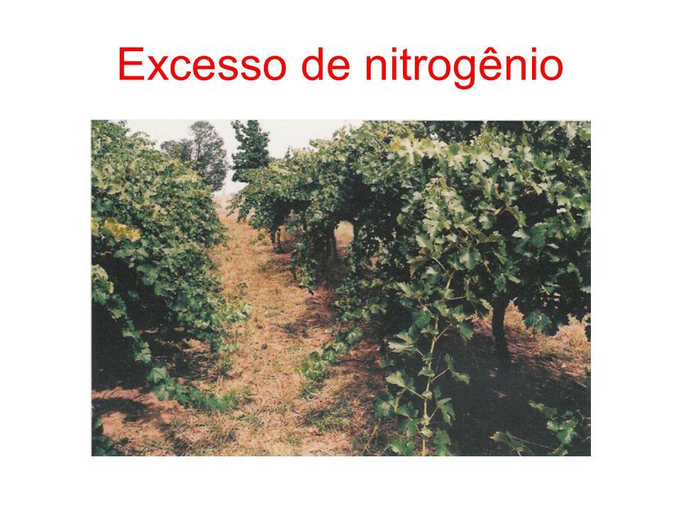 Excesso de nitrogênio 27