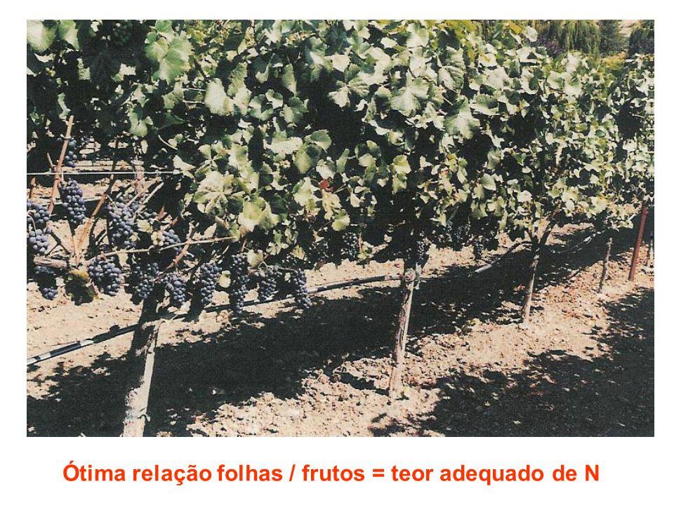 Ótima relação folhas / frutos = teor adequado de N