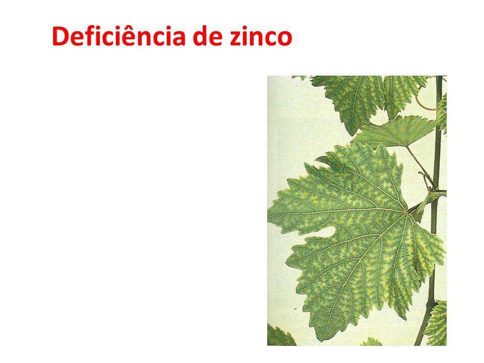 Deficiência de zinco 35