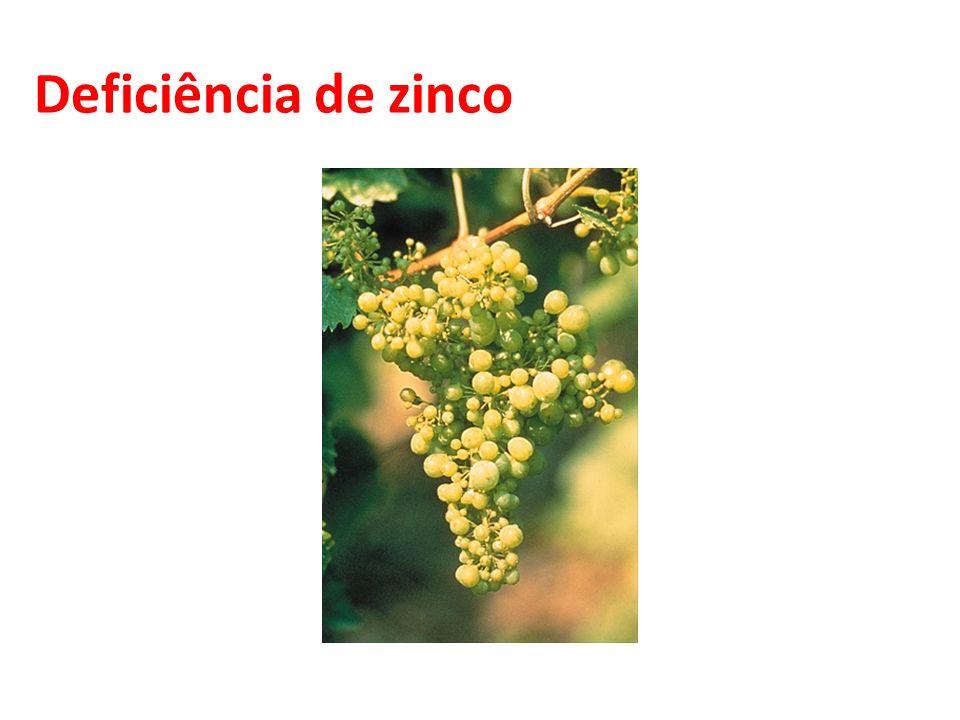 Deficiência de zinco 36