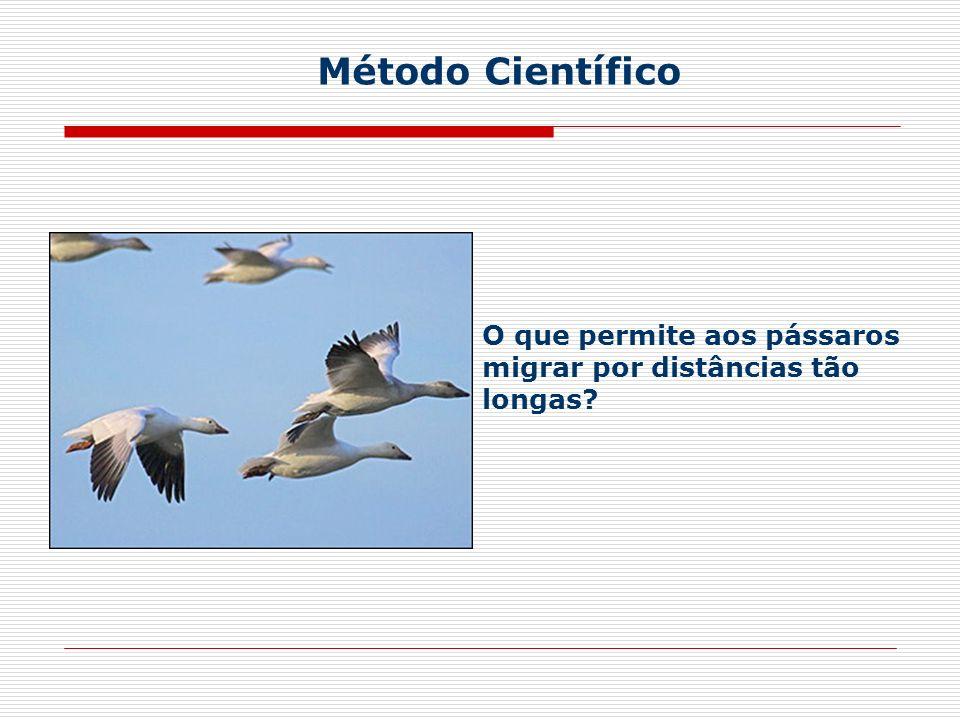 Método Científico O que permite aos pássaros migrar por distâncias tão longas