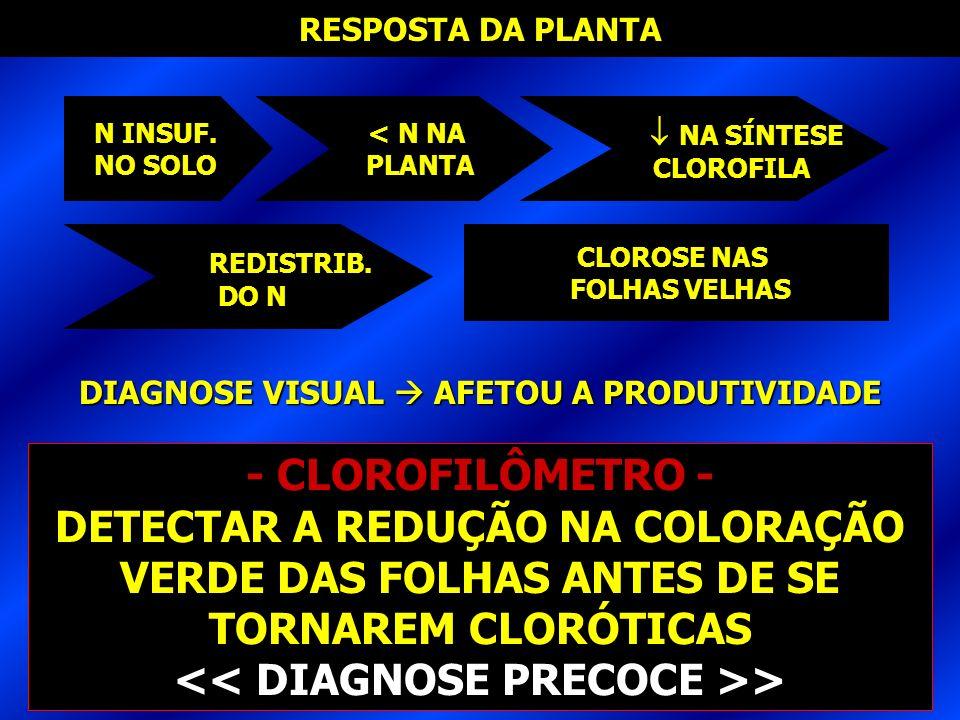<< DIAGNOSE PRECOCE >>