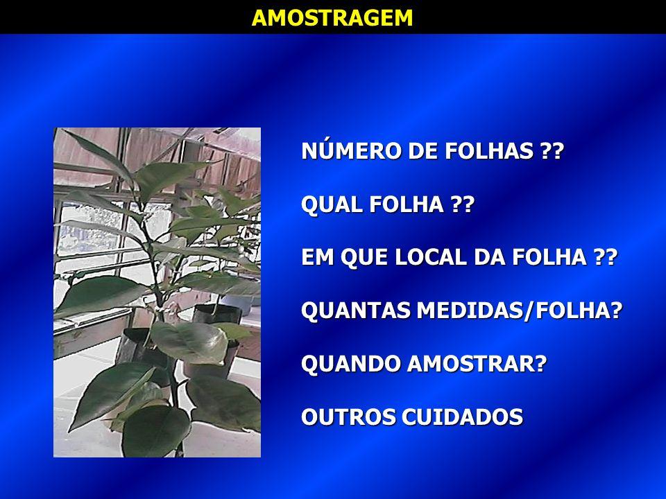 AMOSTRAGEM NÚMERO DE FOLHAS QUAL FOLHA EM QUE LOCAL DA FOLHA QUANTAS MEDIDAS/FOLHA QUANDO AMOSTRAR