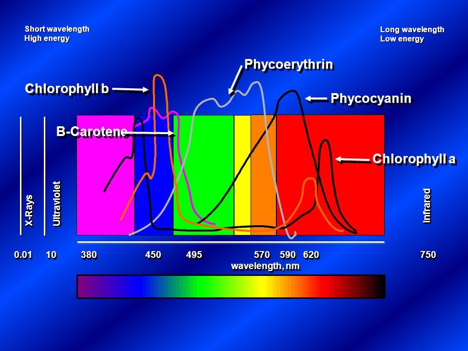 Phycoerythrin Chlorophyll b Phycocyanin B-Carotene Chlorophyll a