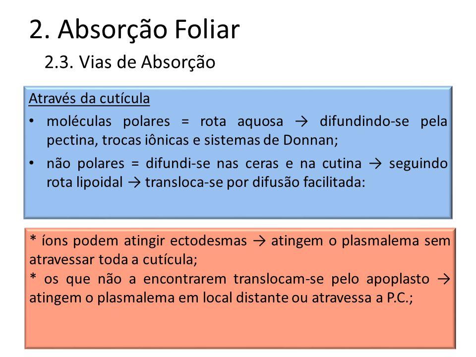 2. Absorção Foliar 2.3. Vias de Absorção Através da cutícula