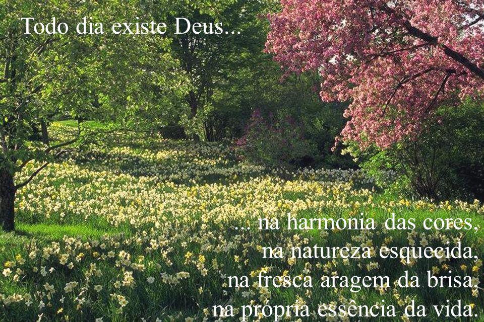 Todo dia existe Deus... ... na harmonia das cores, na natureza esquecida, na fresca aragem da brisa,