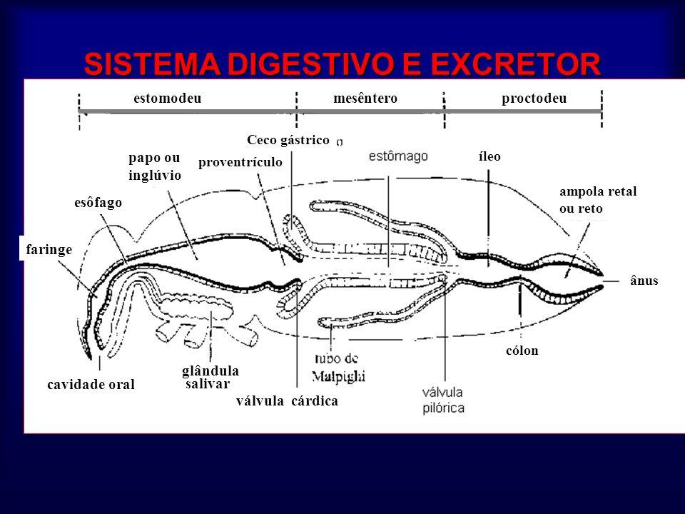 SISTEMA DIGESTIVO E EXCRETOR