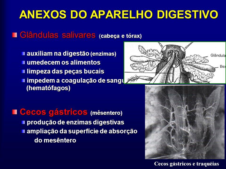 ANEXOS DO APARELHO DIGESTIVO
