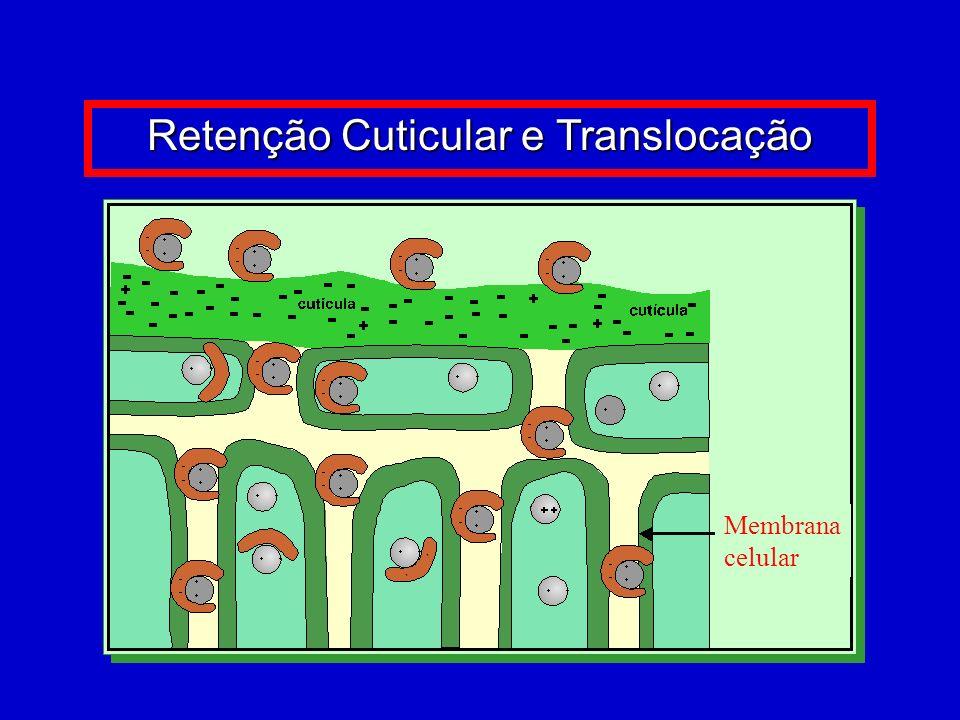 Retenção Cuticular e Translocação