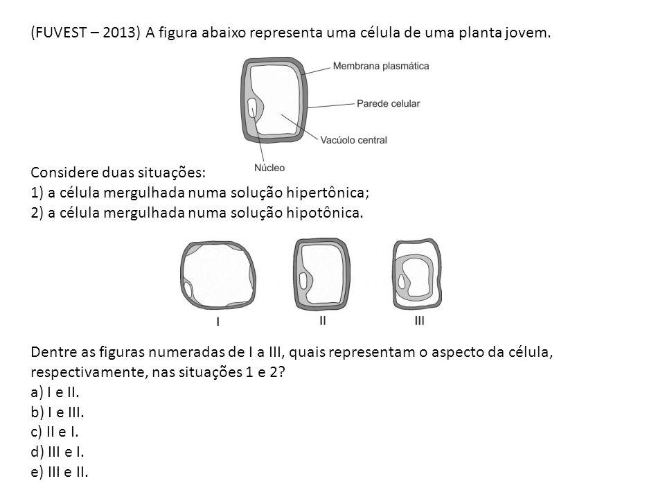 (FUVEST – 2013) A figura abaixo representa uma célula de uma planta jovem.