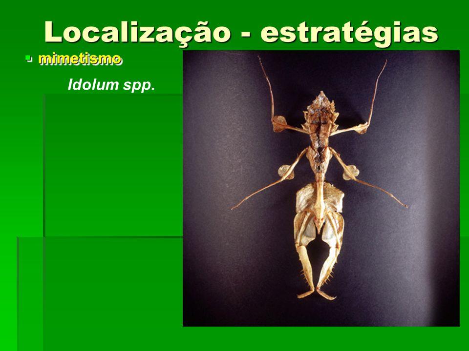 mimetismo Idolum spp.