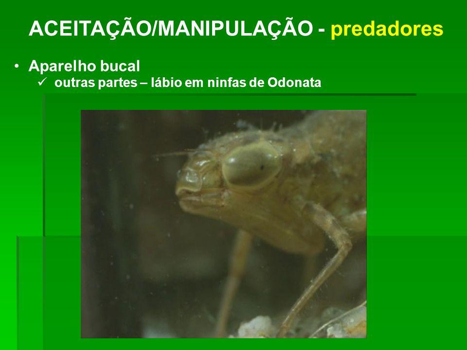 ACEITAÇÃO/MANIPULAÇÃO - predadores