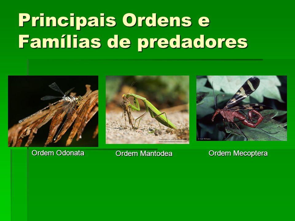 Principais Ordens e Famílias de predadores
