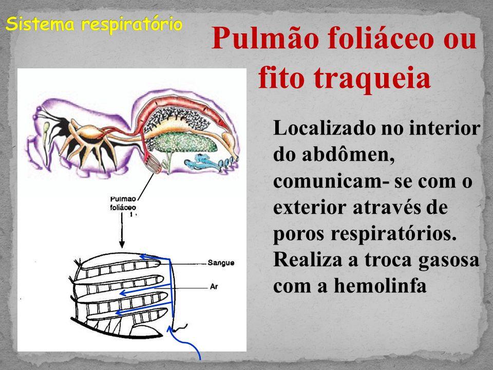Pulmão foliáceo ou fito traqueia