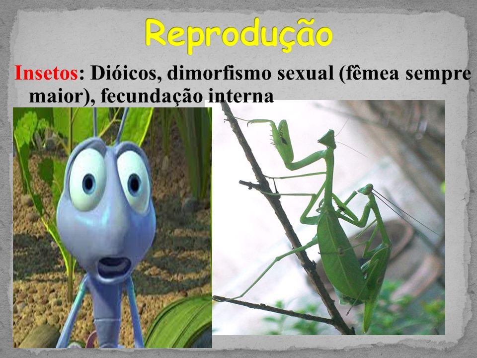 Reprodução Insetos: Dióicos, dimorfismo sexual (fêmea sempre maior), fecundação interna