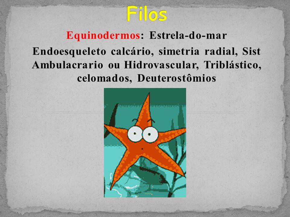 Equinodermos: Estrela-do-mar