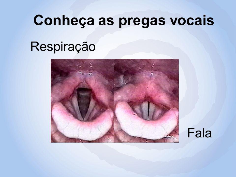 Conheça as pregas vocais